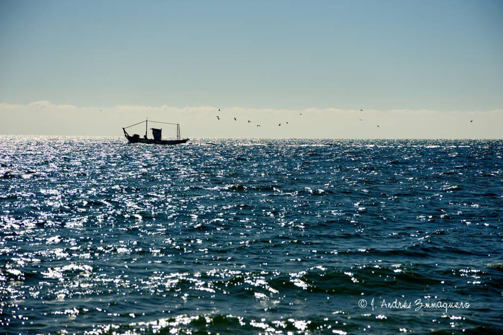 barco_gaviotas_1_fir