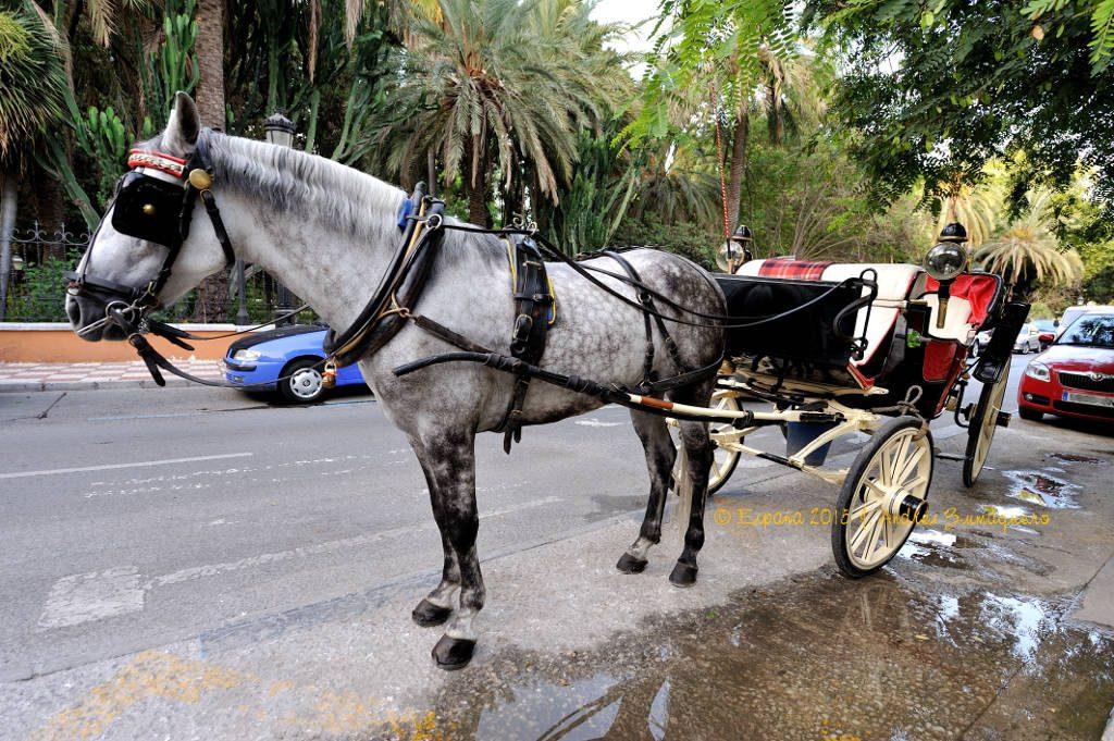 coche_caballos_20150812_202817_marbella_1024